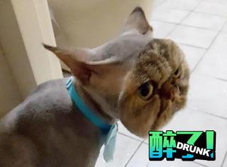 这只猫剃毛之后,拥有了一张假脸