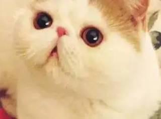 养一只看不见的猫是什么体验?