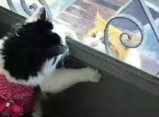 520不想一个人过?那你得向这只猫学习了...