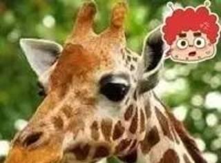 万万没想到,长劲鹿并不仅仅是脖子长!