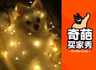 新买的彩灯把狗电糊了