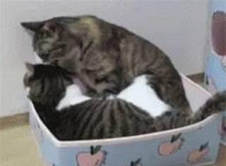 两只猫在专心的舔毛,前一秒还很恩爱,下一秒就...