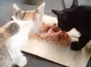 流浪汉:我不吃饭没关系,但猫一定不能饿到!