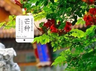 今日芒种:芒种祭花神 青梅煮好酒