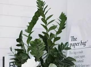 别人高逼格的家里,都有一盆这样的绿色植物