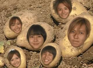 我们要做顽强的土豆!
