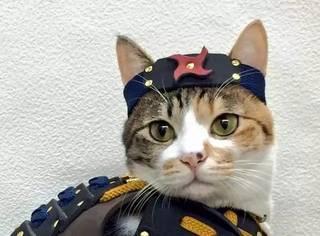 把游戏里的盔甲做给猫猫和狗狗穿是一种怎么样的体验?