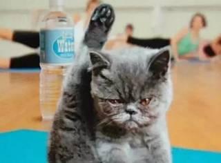 猫,是人类做瑜伽的最大敌人