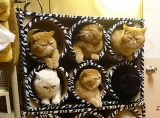 网友养了12只加菲,1只金吉拉,每天的画面超壮观,感受下...