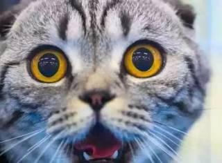 这只猫可能是世界上戏最多的生物...