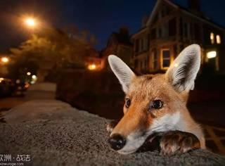 偶尔来串门的野生动物怎么辣么多,难道我们都生活在假都市?