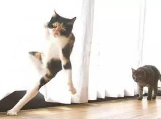 推主是一名摄影师,却非常喜欢捕捉家里两只猫打架的画面