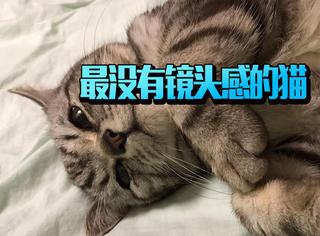 论最没有镜头感的猫还是最服VIKI