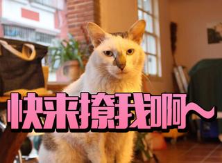 """淡季的鼓浪屿才是猫咪的天堂:""""张三疯""""的幸福猫生"""