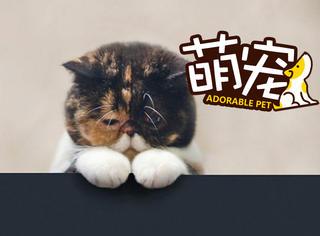如果用猫咪的视角看这个世界,结果可能是令人心碎的