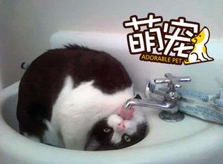 这猫疯了,我也不知道咋回事
