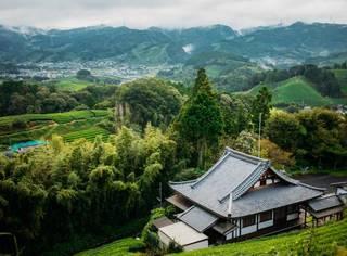 从山麓丘陵到喜马拉雅山脉,这5个最美茶园成为今夏最值得探访的秘境!