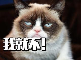 ins爆红不爽猫背后的不为人知:还曾和大牌们合影?