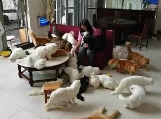 养一群猫是种什么样的体验?