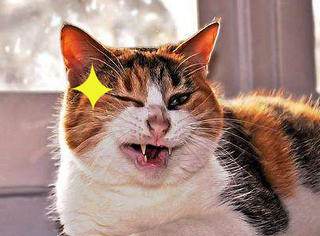 【萌萌动物gif】猫主子为啥喜欢和铲屎官这样玩?捉摸不透呀~