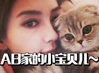 Angelababy的爱宠:日常与猫秀恩爱,晓明你不急嘛?