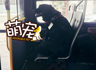 成精了!这只狗会自己坐公交去公园玩