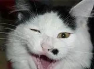 这是一个关于大叔与丑猫的故事,最后好暖