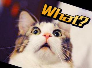 【萌萌动物gif】猫吃完冰激凌后的反应,表情大亮...
