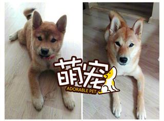 当年的狗子现在长大了