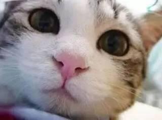 满分100的话,你家猫对你的爱有几分?