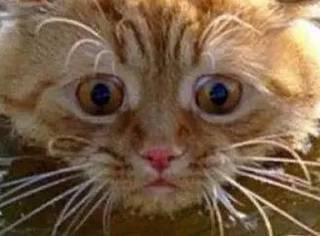 一只不想学游泳的猫咪,最后笑趴了...