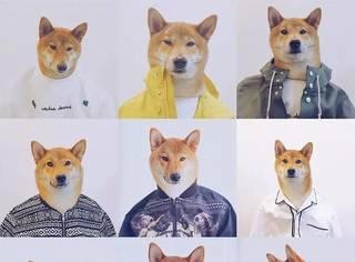 论时尚时尚最时尚,感觉自己输给了一只柴犬