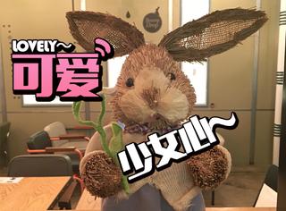 五道口学生聚集地:满足少女心的萌兔咖啡馆~