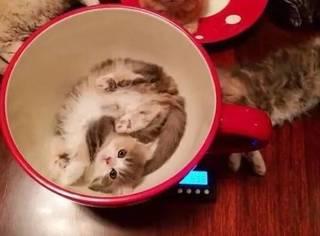 超萌猫下午茶,这位客官,你要来一套吗?