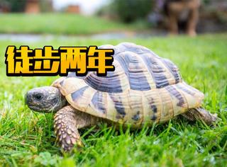 神奇了!家里的乌龟失踪两年,原来是徒步2000米爬回了老房子