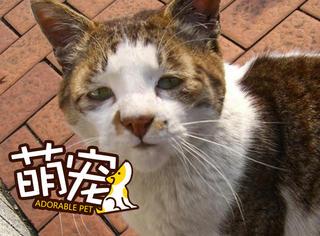 天了噜,这些猫把我给丑到了
