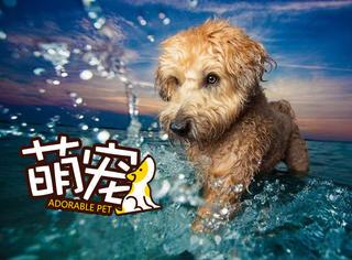 狗狗摄影大赛获奖的作品,每张都很美