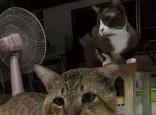 网友表示,家里的喵没什么特别的,就是脸有点丧