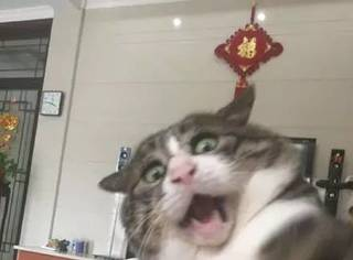 主人拍下逗猫时画面,第一张,我就直接喷饭了...