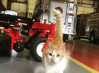 """流浪小猫""""制霸""""消防队,硬汉队员们心甘情愿当猫奴"""
