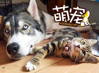 在此猫面前,阿拉终于不撕家了