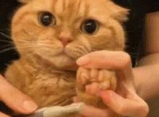 这只猫每到修毛,剪指甲时就呆滞了,这表情萌炸了...