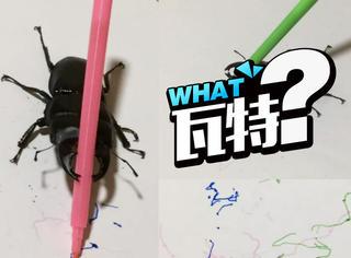 昆虫界的毕加索,这只铁甲虫创作的画拍出千元高价