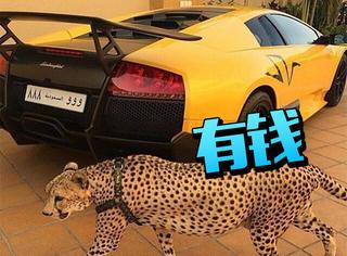 比不了,沙特的富豪们都是这么炫富的