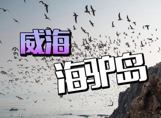 【海岛系列】你知道吗,有一头驴掉到海里了!