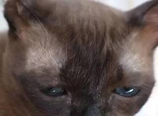 这只猫天生一副一脸生无可恋的样,第一张,我就笑喷了...