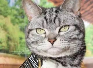 没想到猫咪COS还能那么帅,最后真是帅炸了,感受下...