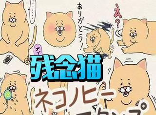 火爆日本的残念猫,吃东西时各种小确丧太戳心了