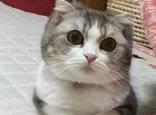 这只猫正面拍照时特别萌,可当换了个角度后,笑喷了...