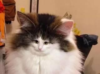 如果把猫的脸P小了之后,哈哈,第一张我就停不下来了...